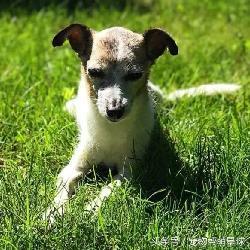 这只濒临死亡的狗狗,本以为会孤独终老,遇见他们后……变了!