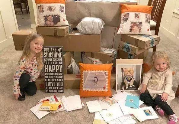 4歲娃緊擁14年家人!老貓泛淚3小時離世