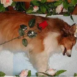 那些被嫌弃的行当——宠物殡葬服务